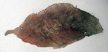 02.25.09f Small Leaf