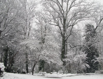 6 Snowy Trees