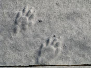 2b footprints