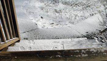 2a footprints