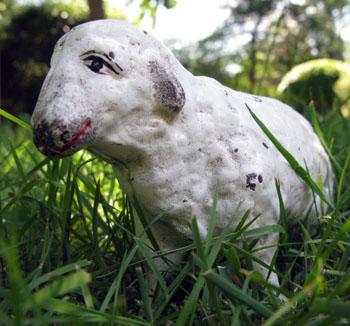 8136 Sheep