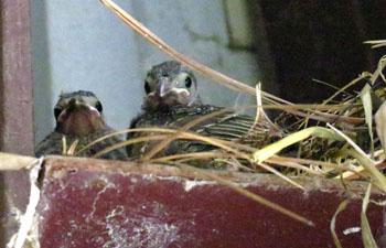 Baby Birds_edited-1