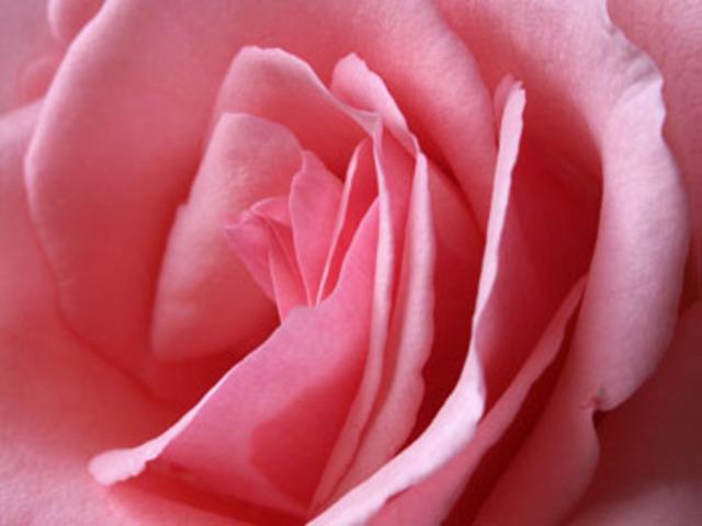 0213_rose