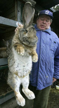 060411_rabbit_big_1