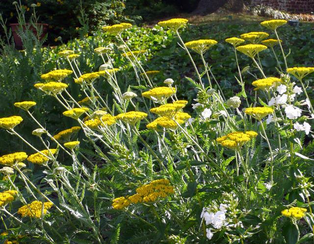 0517_summer_garden