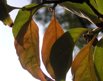 0827_first_fall