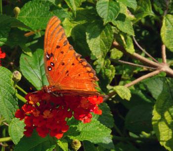 0917_butterfly