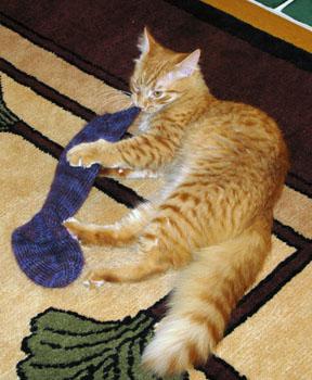 07_sock