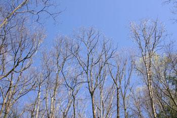 6_lake_trees