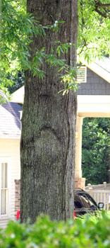 07_tree