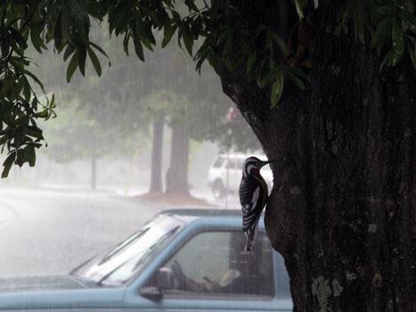 2_woodpecker