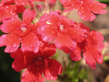 1_flowers