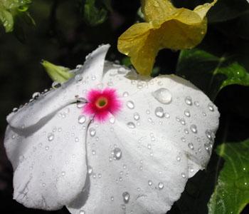 2_flowers