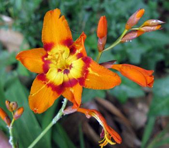 5_flower