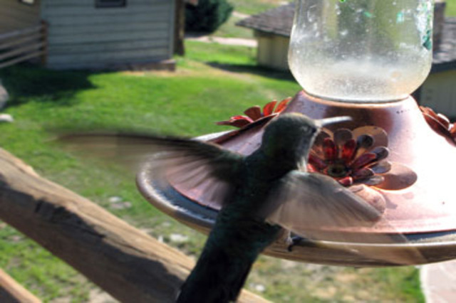 2823_out_of_focus_hummingbird001_2