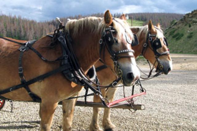 2974_wagon_horses001