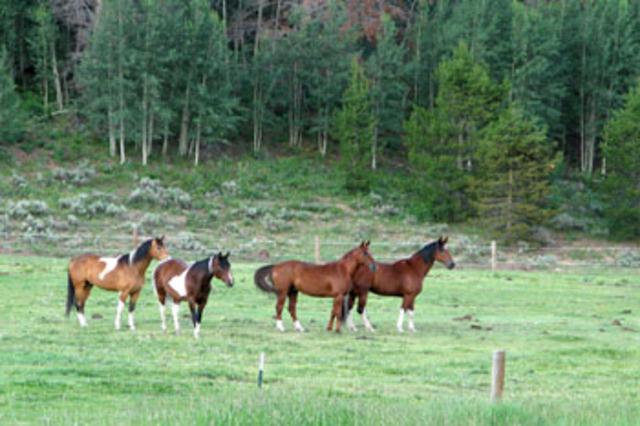 3034_horses_spot_moose001