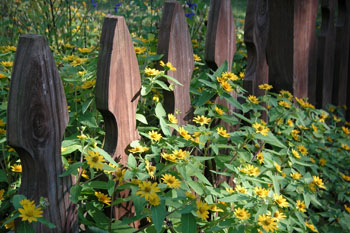 3546_fence_w_yellow_dasies