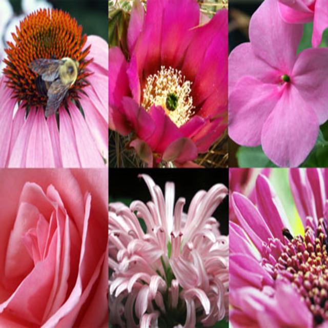 March_unframed_flowers_postcard_size_2