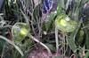 856_green_glass_plants